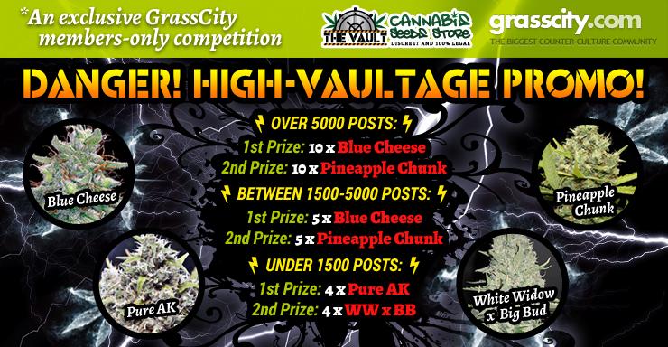 Vault Seeds Grasscity Blog