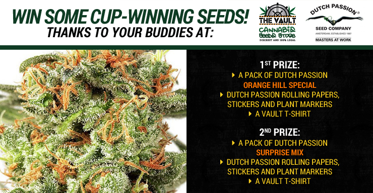 Bag some cup winning seeds with Dutch Passion and The Vault Blog Promo
