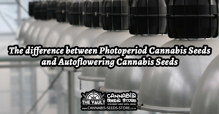 The_difference_between_Photoperiod_Cannabis_Seeds_and_Autoflowering_Cannabis_Seeds