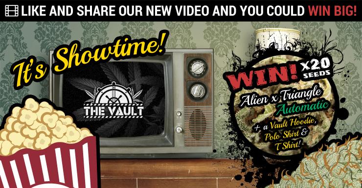 Vault  Video  Blog