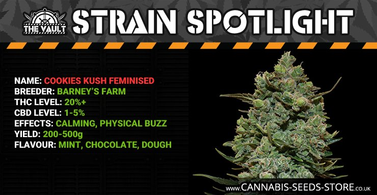 Strain_Spotlight_CK_Blog