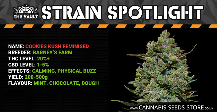 Strain Spotlight: Cookies Kush Feminised by Barney's Farm