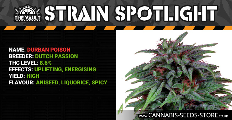 Strain_Spotlight_DP_Blog