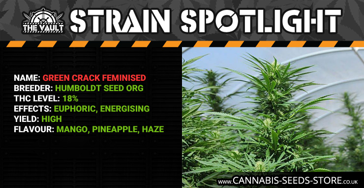 Strain_Spotlight_GC_Blog