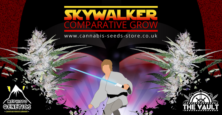 The Vault's Skywalker Auto Comparative Grow - in association with Mephisto Genetics