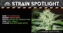 Strain Spotlight: Auto Speed Bud by Female Seeds
