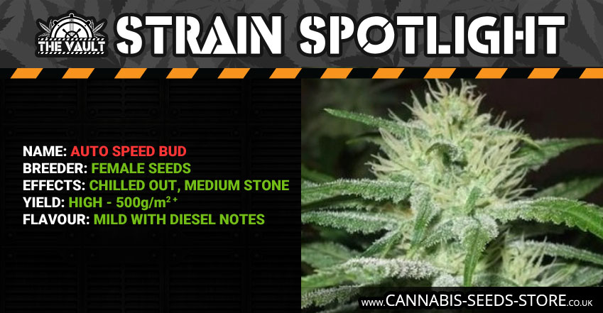Strain_Spotlight_Auto_Speed_Bud