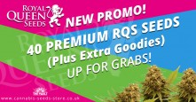 New Promo: 40 Premium Royal Queen Seeds Up For Grabs!