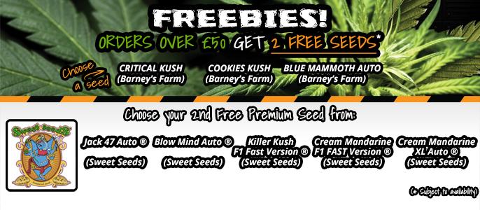 Sweet Seeds Promo