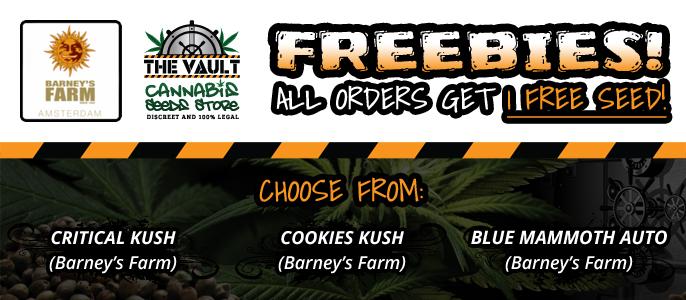 Barneys Farm Free Seeds