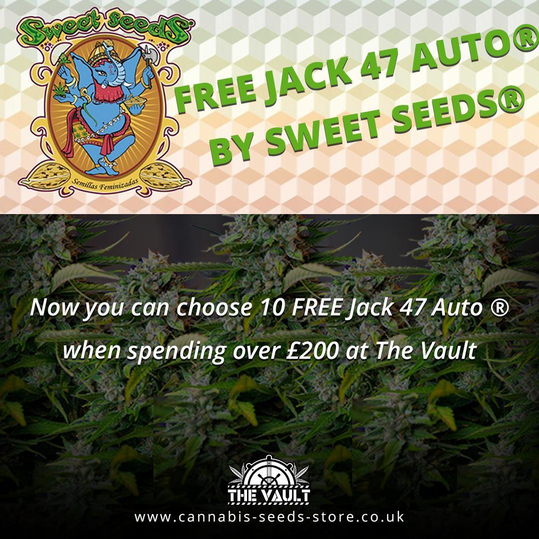 Sweet Seeds Jack 47