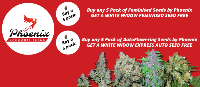 Phoenix Cannabis Seeds Promo