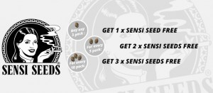 Sensi Seeds On Purchase Promo