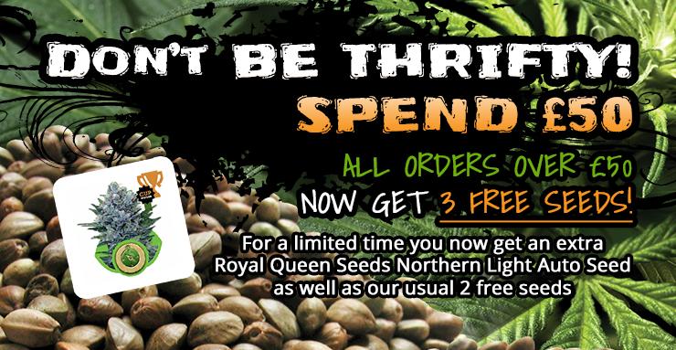 Freebie Seeds 50