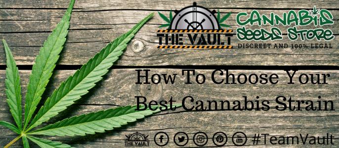 Which Cannabis Seed Strain