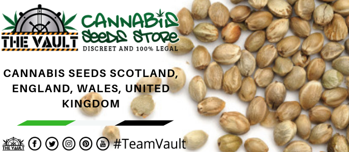 Cannabis Seeds UK
