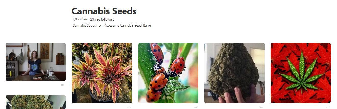 Cannabis school on pinterest