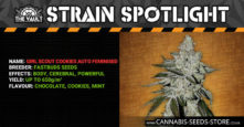 Strain Spotlight: Girl Scout Cookies Autoflowering