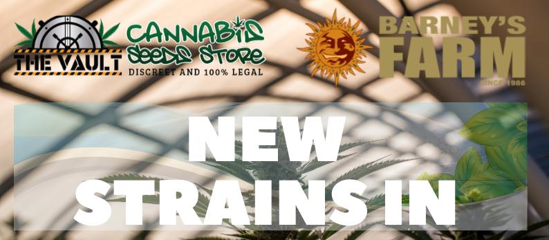 Barneys Farm Cannabis Seeds Freebies