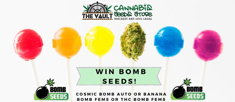 Bomb Cannabis Seeds