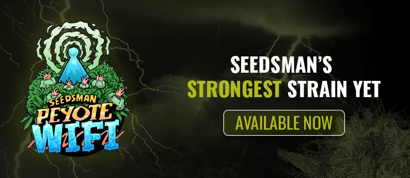 Peyote Wifi Cannabis Seeds from Seedsman