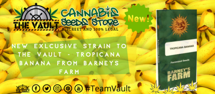 Barneys Farm TROPICANNA BANANA Only Available at The Vault