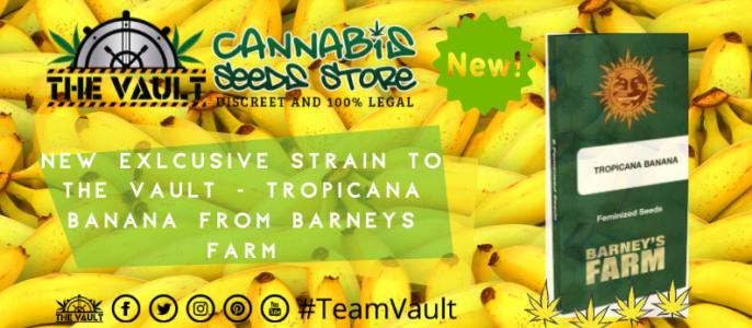 Barneys Farm TROPICANNA BANANA Only Available at The Vault