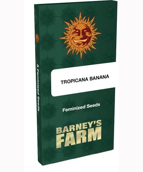 Tropicanna Banana