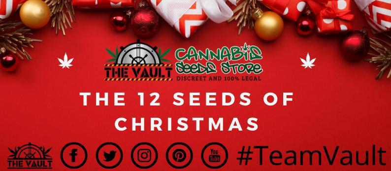 The 12 Cannabis Seeds of Christmas