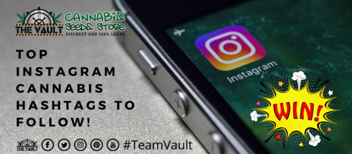 Top Instagram Cannabis Hashtags To Follow