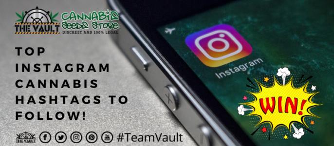 Top Instagram Cannabis Hashtags To Follow