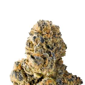 Colossal Purps Feminized Seeds