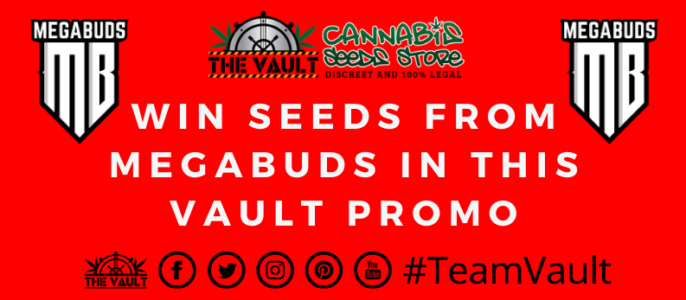 Mega Buds – Mega Promo at The Vault Cannabis Seeds Store