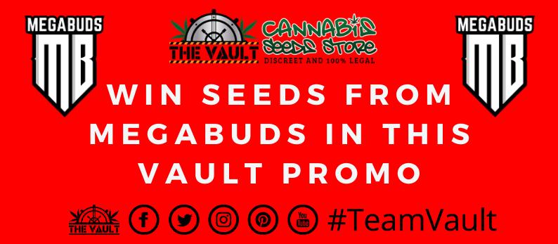 Mega Buds Cannabis Seeds