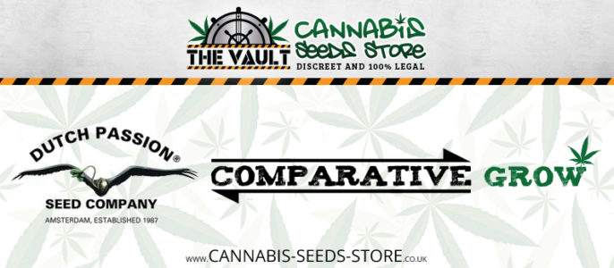 Comparative Grow: from Dutch Passion at The Vault