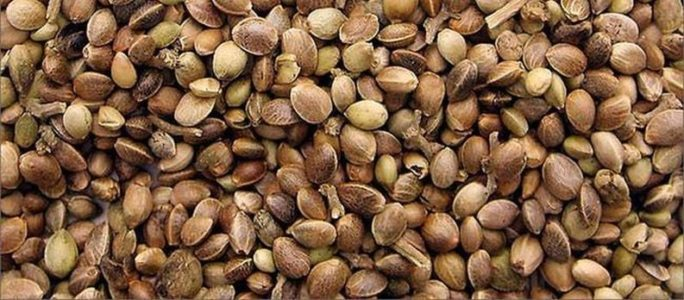 Seed banks, breeders and strains you should know: Part 2