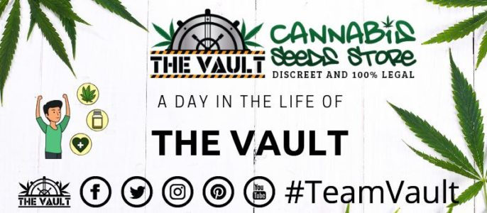 A Day in the life of TEAMVAULT