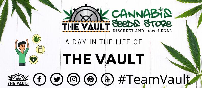 Team Vault