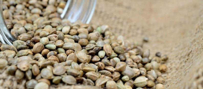 Cannabis Seedbank