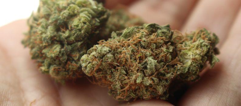marijuana vs cannabis
