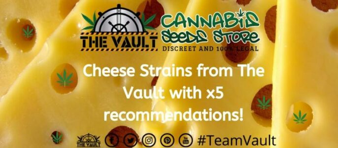 Cheese Cannabis Strains