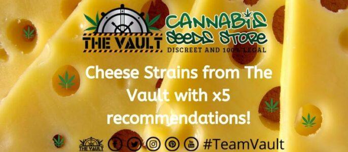 Cheese Cannabis Strains