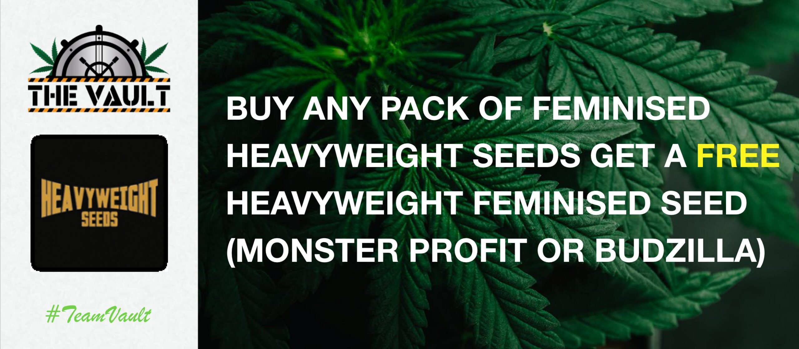 Heavyweight Cannabis Seeds