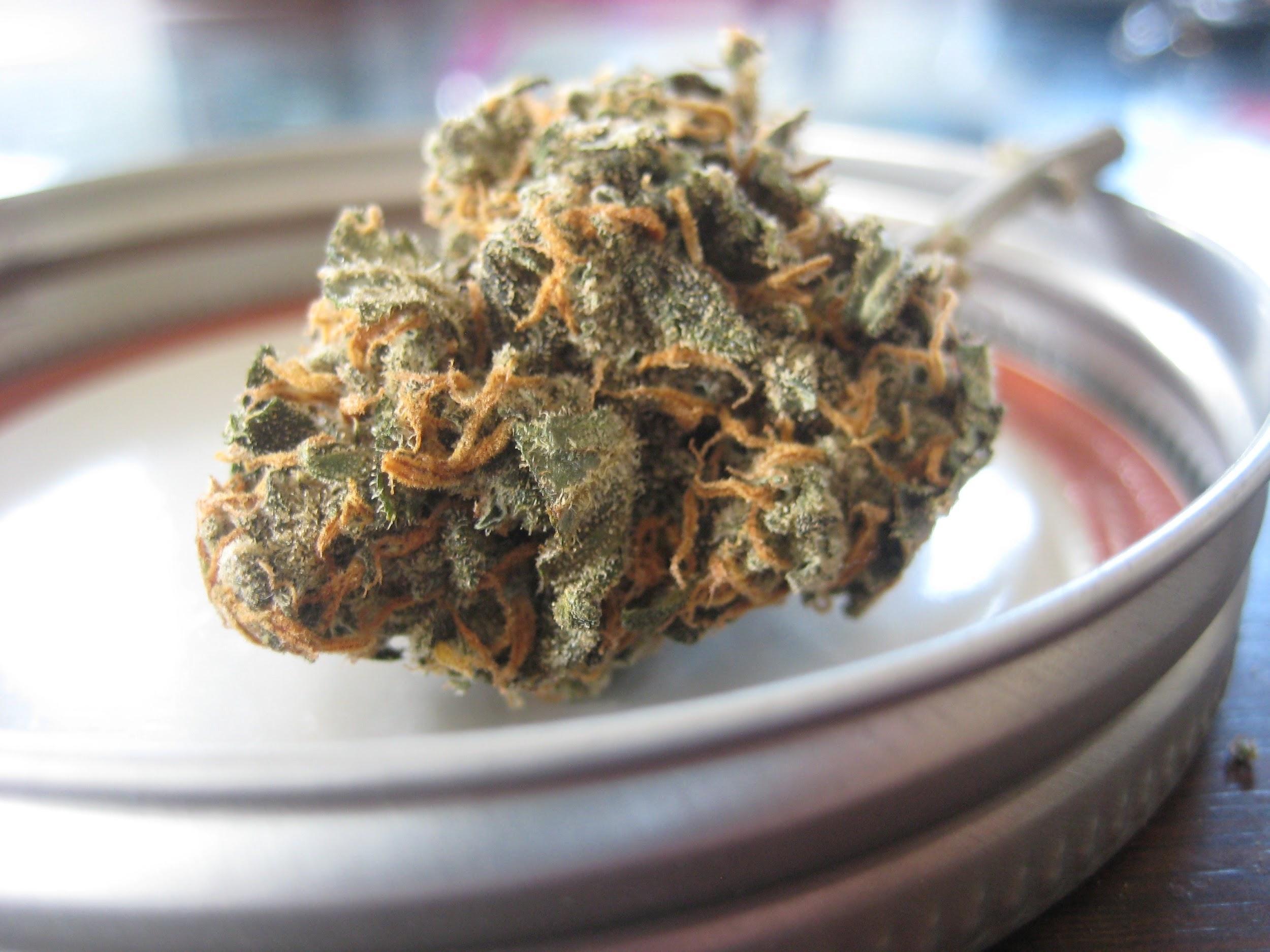 Cannabis Nug Athletics Blog