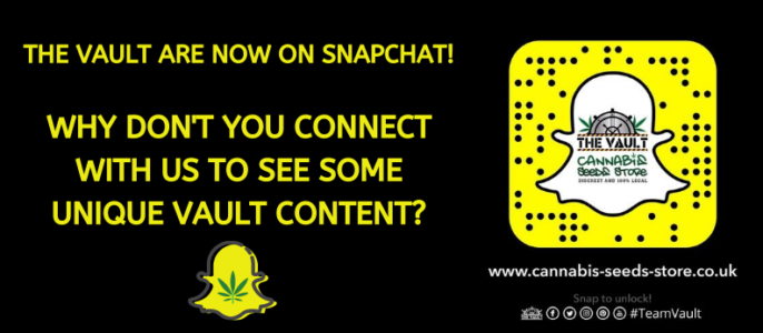 The Vault Are Now on Snapchat – Are You?