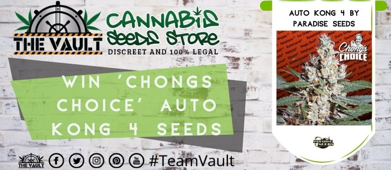 Chongs Choice Vault Cannabis Seed Promo