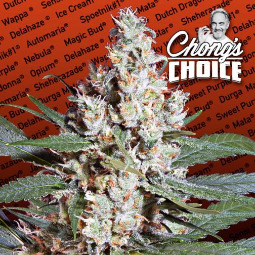 Auto Kong 4 Paradise Seeds Vault Cannabis