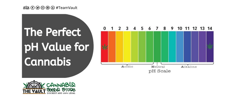 The Perfect pH Value For Cannabis