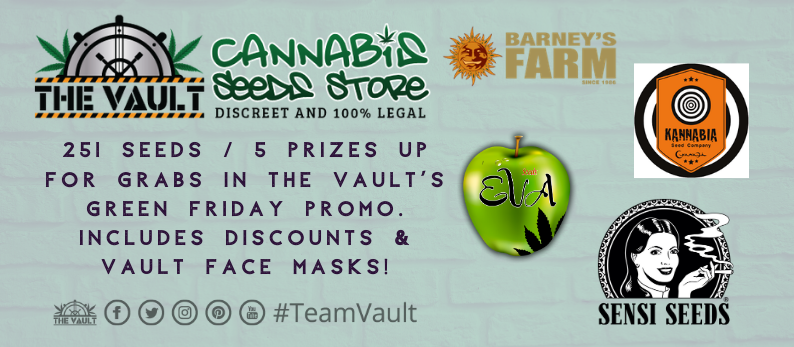 The Vault Cannabis Seeds Green Friday