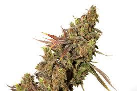 CC Cannabis